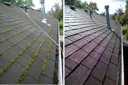 Roof Moss Removal Near Me Seattle